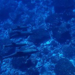 sea-1677651_960_720